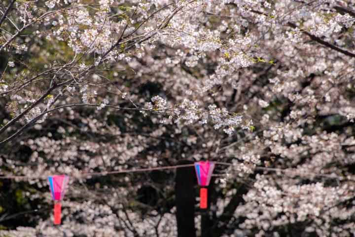 東京都北区王子:飛鳥山公園